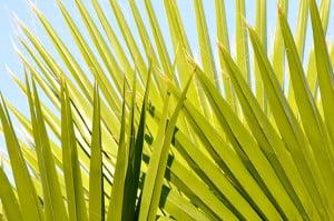 African plant. Nikon D90, Nikkor 55-300mm